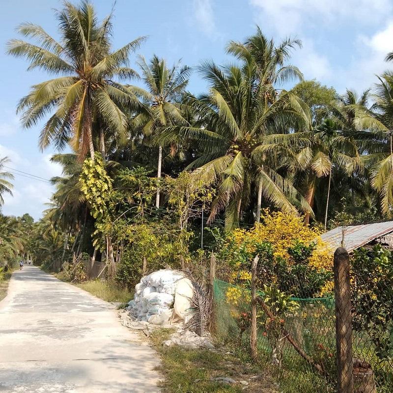 địa điểm vườn trái cây bến tre