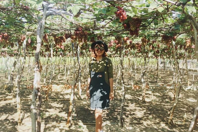 vườn trái cây ở đồng nai