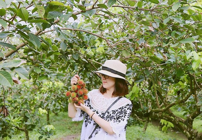 vườn trái cây hòa khánh
