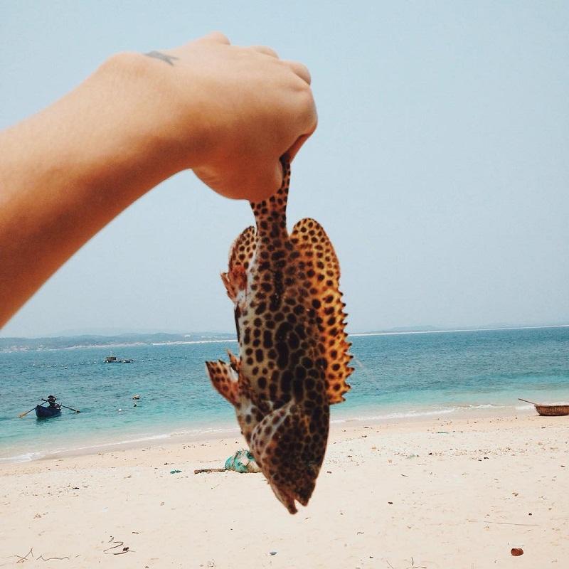 bãi biển ở phú yên