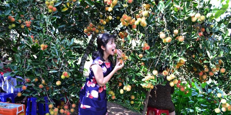 vườn trái cây cái mơn bến tre