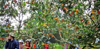 vườn trái cây bến tre