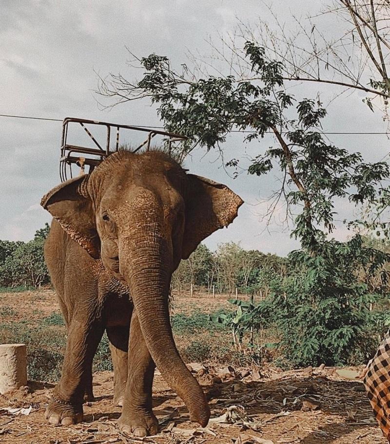 cưỡi voi ở kotam